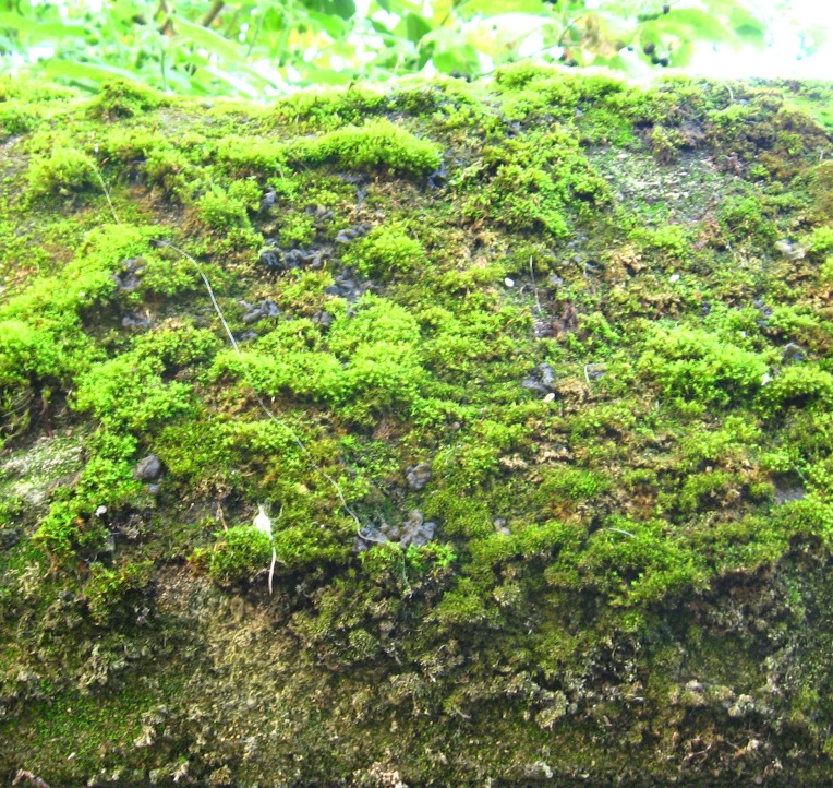 green moss on wall
